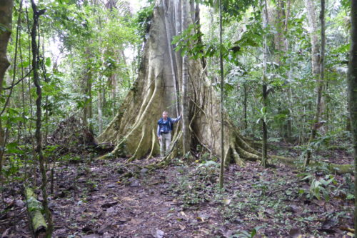 Large tree in rainforest